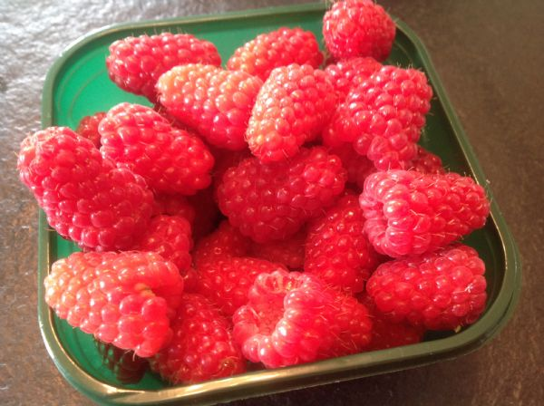 organic raspberries straight from our garden